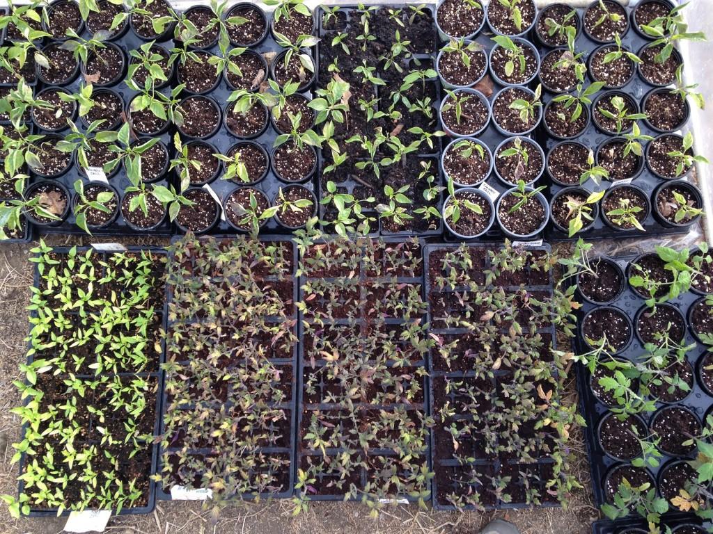 Starter-Plants-FandG-Garden2014-S